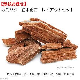 カミハタ 紅木化石 レイアウトセット 45〜75cm水槽向け 形状おまかせ 関東当日便