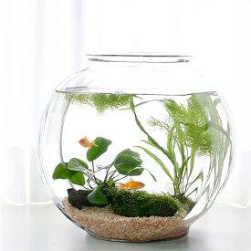 (金魚)(水草)おしゃれなガラス製金魚鉢 太鼓鉢 大 金魚飼育セット 説明書付 本州四国限定