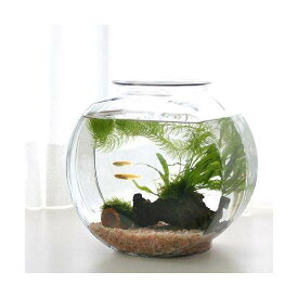 (めだか)(水草)おしゃれなガラス製金魚鉢 太鼓鉢 中 メダカ飼育セット 説明書付 本州四国限定