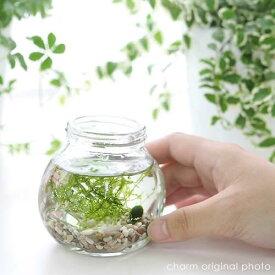 (水草)私の小さなアクアリウム 〜マリモとウィローモス〜(1セット) 説明書付 本州四国限定
