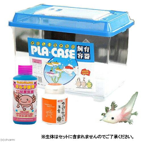 ウーパールーパー飼育用品セット 関東当日便