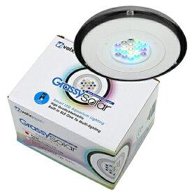 □ボルクスジャパン グラッシーソーラー リーフ Solar Reef 沖縄別途送料 関東当日便