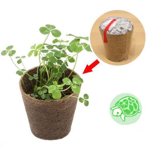 (観葉)種まき済み シロクローバー栽培 ECOポット 1ポット 白クローバー 白詰草 シロツメクサ リクガメ用 カメ 餌