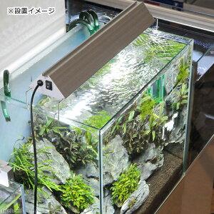 アクロオリジナルLEDTRIANGLEWHITE450【HLS_DU】関東当日便