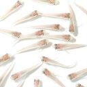 (めだか)白メダカ初心者セット 白メダカ(6匹) +ヒメタニシ(5匹) セット 北海道航空便要保温
