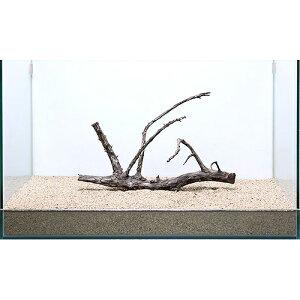 アウトレット品 一点物 極上流木単体 60cm水槽用 234016  訳あり 関東当日便