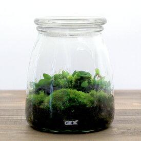 (観葉植物)GEX ボトリウム ミルキィラブ 苔レイアウトセット 本州四国限定