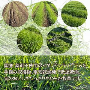 令和元年新刈国産旬のやわらかイタリアンライグラス100g無農薬無添加小動物のおやつ関東当日便
