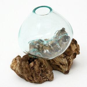 一点物 ラウンドガラス 流木スタンド付(239486)コケ テラリウム ガラス インテリア 瓶 関東当日便