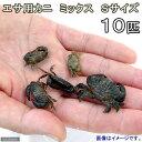 (海水魚)カニ 生餌 エサ用カニ ミックス Sサイズ(10匹) 北海道・九州航空便要保温
