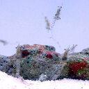 (海水魚)生餌 海洋性イサザアミ(5g) 北海道・九州航空便要保温