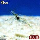 (海水魚)生餌 エサ用エビミックス Sサイズ(100匹)