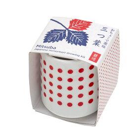 聖新陶芸 おちょこで薬味栽培セット みつ葉 関東当日便
