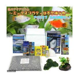 (熱帯魚)後日生体 私の小さなアクアリウム 〜ミックスプラティは不思議な魚〜 水槽セット 説明書付 チャームオリジナル飼育セット 本州四国限定