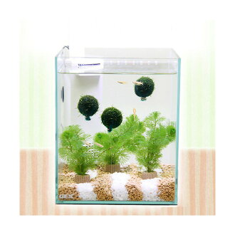 GEX glass Terrier silent 200 cubes H Island gravel Island fish and aquatic plants set Killifish full Honshu and Shikoku limited
