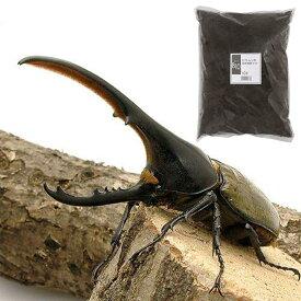 (昆虫)ヘラクレス・ヘラクレス幼虫(1匹) + XLマット カブト用 10リットル(説明書付)  本州四国限定