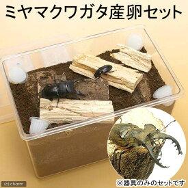 ミヤマクワガタ産卵セット 説明書付き 昆虫 クワガタ 器具のみのセット 関東当日便