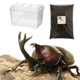 (昆虫)国産カブトムシ幼虫飼育セット(幼虫3匹付き) 本州四国限定