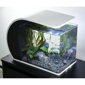 (熱帯魚)(水草)LEDアークアクアリウム 水槽セット ARC−43 初心者 本州四国限定