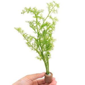 (水草)ライフマルチ(茶) ベトナム産スプライト(水上葉)(無農薬)(1個)