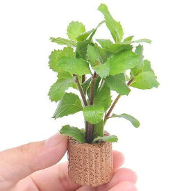 (水草)ライフマルチ(茶) ウォーターウィステリア(水上葉)(無農薬)(1個)