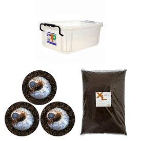 (昆虫)国産カブトムシ幼虫飼育セット(説明書付) 本州四国限定