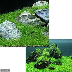 (水草)前景 水上葉(無農薬)2種セット キューバパールグラス キューブL(1個)+ヘアーグラス ショート(2束分)