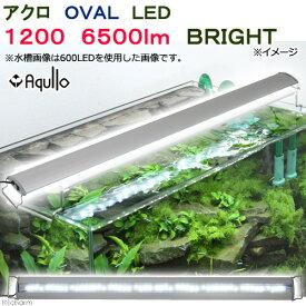 アクロ OVAL LED 1200 6500lm BRIGHT Aqullo 120cm水槽用 ライト 沖縄別途送料 関東当日便