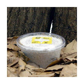 冷蔵★菌糸カップ G−カップ 120cc 2個 別途クール手数料 常温商品同梱不可