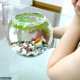 (金魚)昔なつかし with金魚セット charm version 飼育セット お一人様2点限り 本州四国限定