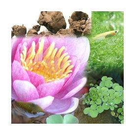 (ビオトープ)(めだか)ビオ植物とメダカセット 睡蓮(スイレン) 桃 鉢なしセット 本州四国限定