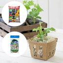 (観葉植物)緑のカーテン ゴーヤ苗から栽培セット 苗2ポット・用土・ネットの3点セット (説明書付) 家庭菜園