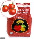 (観葉)エコバッグで育てる 簡単トマト栽培セット(ぜいたくトマト) 家庭菜園