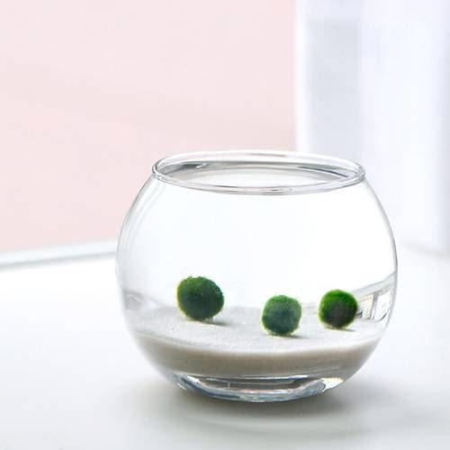(水草)私の小さなアクアリウム 〜白砂のマリモ(バブルボールSS)〜(説明書付) 本州・四国限定