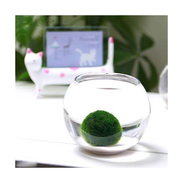 (水草)私の小さなアクアリウム 〜白砂のセイヨウマリモ(フローラボールS)〜(説明書付) 本州・四国限定