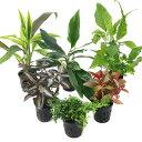 (テラリウム)おまかせテラリウム用植物 3種セット + おまかせ苔2パックセット 本州四国限定