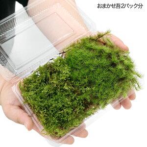 ■おまかせテラリウム用水草3種3ポットセット+おまかせ苔2パックセット
