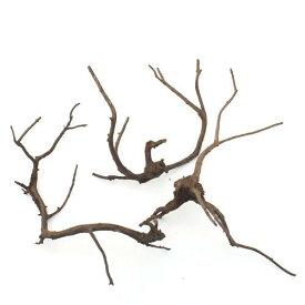 形状お任せ 煮込み済み 極上流木 Mサイズ(約20〜30cm)3本セット お一人様2点限り 関東当日便