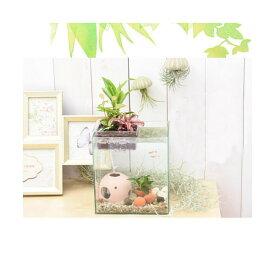 (熱帯魚)(水草)私のアクアリウム アクアテリア N160 ゴールデンアカヒレ飼育セット(生体・植物・ヒーター付き)おしゃれ水槽セット 本州四国限定