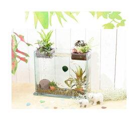 (熱帯魚)(観葉植物)私のアクアリウム アクアテリアS300 ゴールデンアカヒレ飼育セット(生体・植物付) 本州四国限定