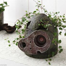 (観葉植物)ジブリプランター 天空の城ラピュタ ロボット兵の思い ワイヤープランツ仕立て(植え込み完成品)(1鉢) 北海道冬季発送不可
