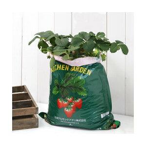 (観葉植物)デルモンテ キッチンガーデン 簡単イチゴ栽培セット(イチゴ苗 めちゃウマッ!) 家庭菜園 お一人様2点限り