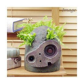 (観葉植物)ジブリプランター 天空の城ラピュタ ロボット兵の思い ネフロレピス ツデー仕立て(植え込み完成品)(1鉢)