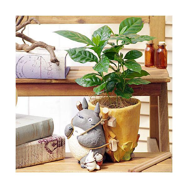 (観葉植物)ジブリプランターカバー トトロのお届けよいこらしょ 観葉植物セット(コーヒーの木)