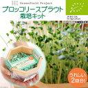 (観葉)スプラウト栽培セット 有機種子 ブロッコリースプラウト栽培キット(1セット) 家庭菜園