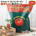 (観葉)私の菜園 デルモンテ キッチンガーデン 簡単トマト栽培セット(ぜいたくトマト) 家庭菜園