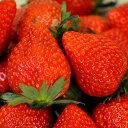 (観葉植物)野菜苗 イチゴ とちおとめ 3号(1ポット) 家庭菜園 いちご苗【HLS_DU】