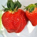 (観葉植物)野菜苗 イチゴ メタボッチ 3号(3ポット) 家庭菜園 いちご苗【HLS_DU】