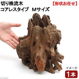 形状お任せ 切り株流木 コアレスタイプ Mサイズ 1本 約20〜30cm レイアウト 盆栽