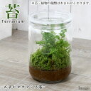 (観葉植物)苔Terrarium おまかせオアシス苗 ガラスボトルL 説明書付